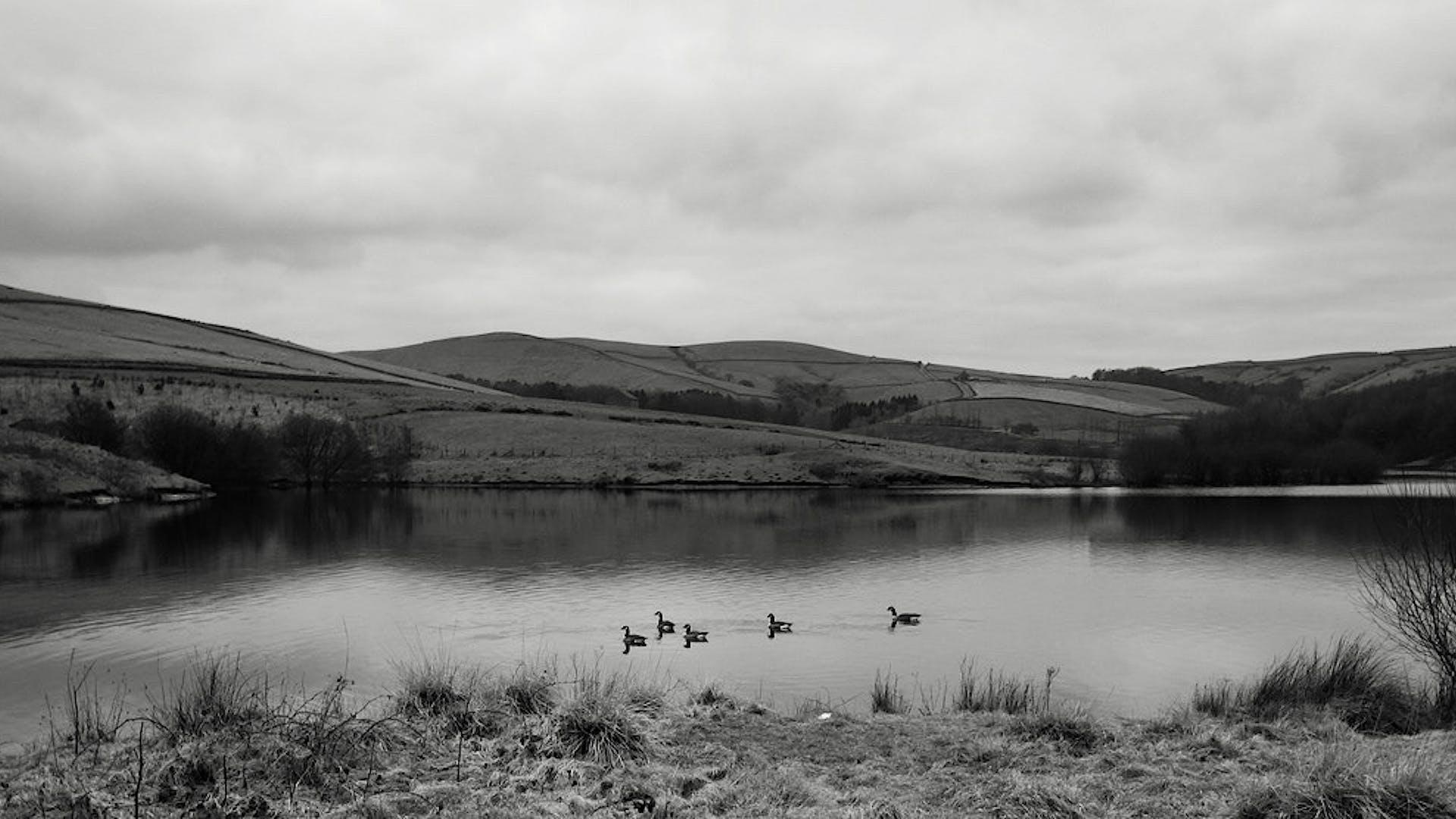 Lake with birds edit 1